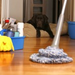 Warning!  Your clean house could be poisoning your pets